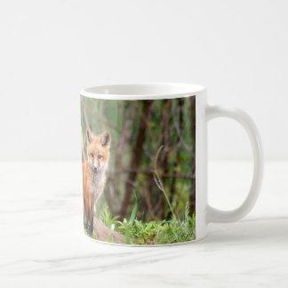 Photo of adorable red fox kits coffee mug