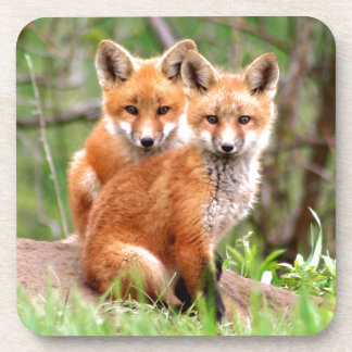 Photo of adorable red fox kits sitting together coaster