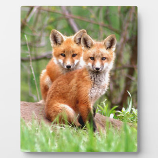 Photo of adorable red fox kits sitting together plaque