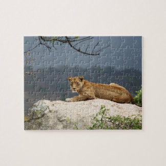 Photo of African lion lying on rock in nature Puzzles