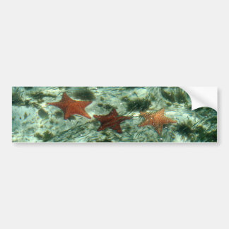 Photo of Belize Starfish Car Bumper Sticker