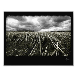 Photo of black and white wheat field.