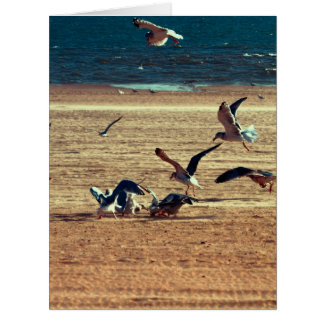 Photo of Coney Island Beach w/Seagulls Cards