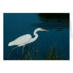 Photo of Crane by blue lake greeting card