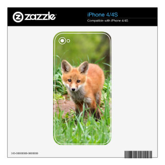 Photo of curious fox kit decal for the iPhone 4