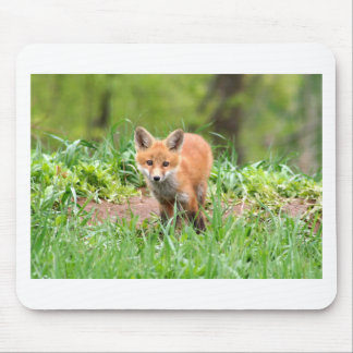 Photo of curious fox kit mouse pad