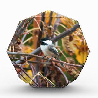 Photo of cute Black-Capped Chickadee Acrylic Award
