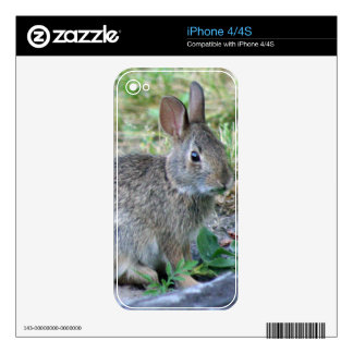 Photo of cute bunny decal for the iPhone 4S