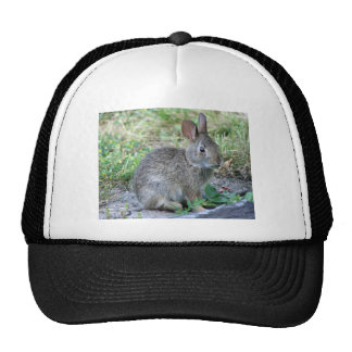 Photo of cute bunny trucker hat