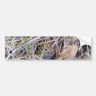 Photo of cute mouse bumper sticker