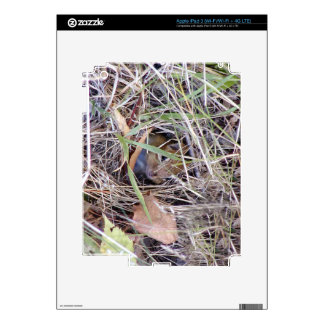 Photo of cute mouse decal for iPad 3