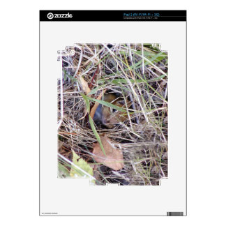 Photo of cute mouse iPad 2 decal