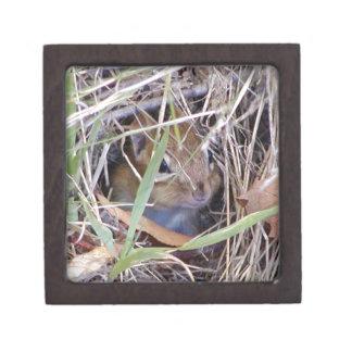 Photo of cute mouse keepsake box