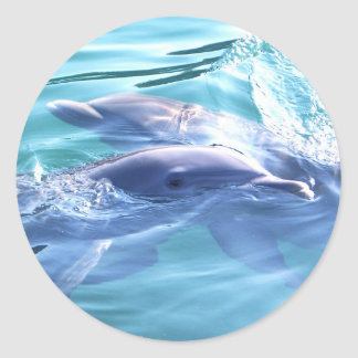 Photo of Dolphins Classic Round Sticker