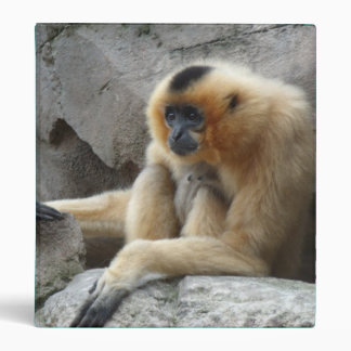 Photo of Orange and Black Gibbon Relaxing on Cliff 3 Ring Binder