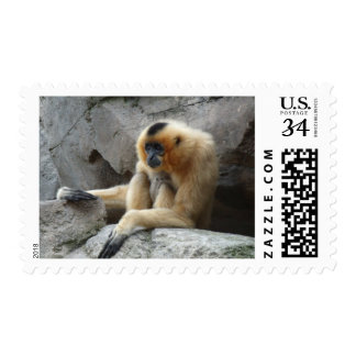 Photo of Orange and Black Gibbon Relaxing on Cliff Postage