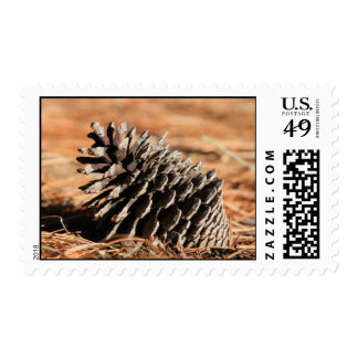 Photo of pine seed on red winter needles postage