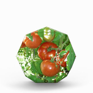 Photo of ripe red tomatoes on the vine awards