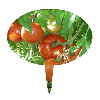 Photo of ripe red tomatoes on the vine. cake topper