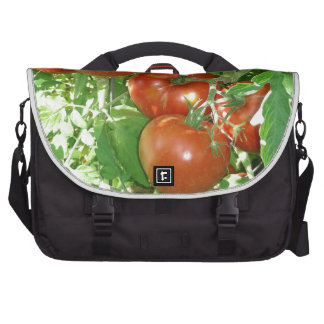 Photo of ripe red tomatoes on the vine. laptop bag