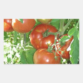 Photo of ripe red tomatoes on the vine. rectangular sticker