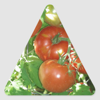 Photo of ripe red tomatoes on the vine. triangle sticker