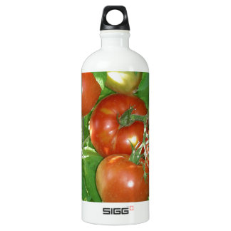 Photo of ripe red tomatoes on the vine. water bottle
