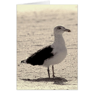 Photo of Seagull on Coney Island Beach Card
