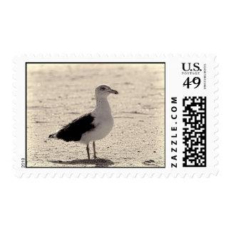 Photo of Seagull on Coney Island Beach Postage