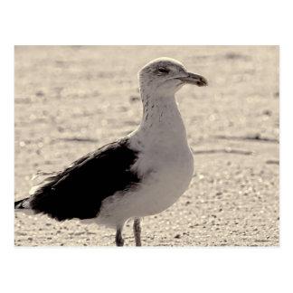 Photo of Seagull on Coney Island Beach Postcards
