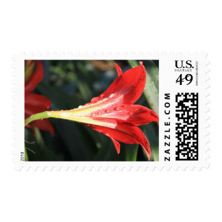 Photo of Vivid Red Daylily Blossom w/ Water 4447 Postage