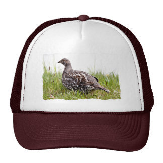 Photo of Wild Grouse Mesh Hats