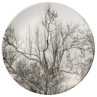 Photo of Winter Fog in Central Park NYC Porcelain Plate