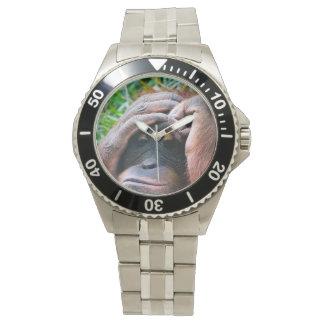 Photo Orangutan Ape Watch