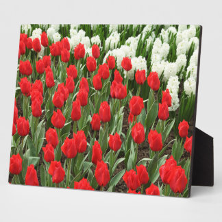Photo Plaque-Red Tuulips Plaque