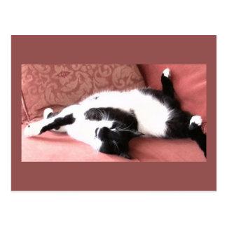 Photo Postcard 10 - Cat Nap 2 - Animal Beauty