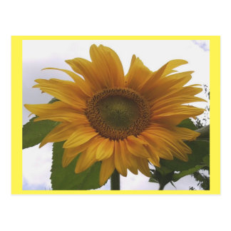 Photo Postcard 7 Sunflower - Natural Beauty