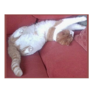 Photo Postcard 9 - Cat Nap 1 - Animal Beauty