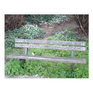 Photo Postcard - Meet me here? - Woodland Bench