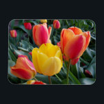 "Photo Premium Magnet<br><div class=""desc"">You can create your own photo magnet souvenir by replacing my image of tulips with your own digital photo. Create a nice souvenir from a family vacation.</div>"