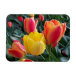 Photo Premium Magnet<br><div class='desc'>You can create your own photo magnet souvenir by replacing my image of tulips with your own digital photo. Create a nice souvenir from a family vacation.</div>