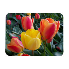 Photo Premium Magnet at Zazzle