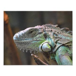 Photo print with head of a colourful Iguana lizard