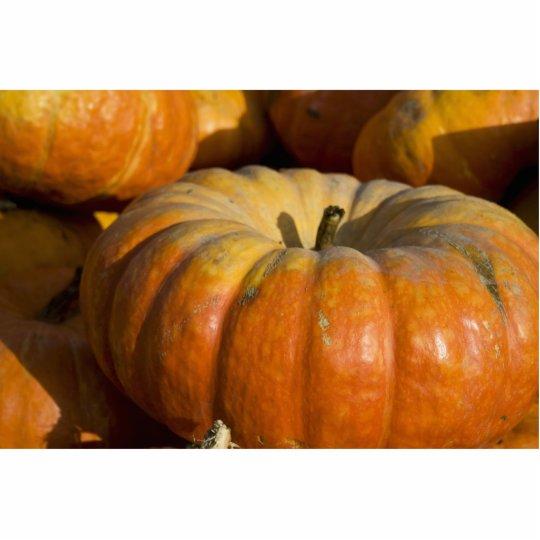 Photo Sculpture:  Great Pumpkin Statuette