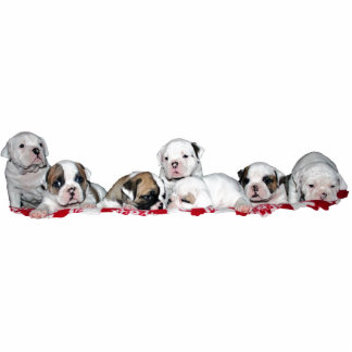 Photo sculpture (photo sculpture) puppies 2010