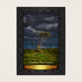 Photo Services - fine art lone bush, metal frame Business Card
