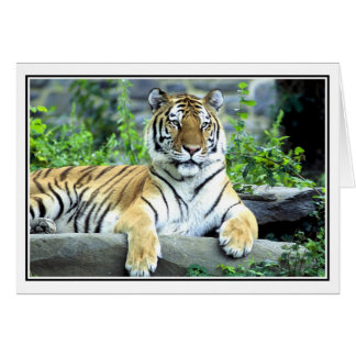 Photo Siberian tiger Card
