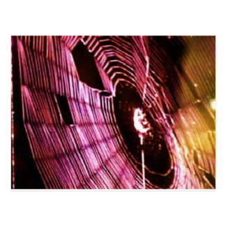 photo spider web post card