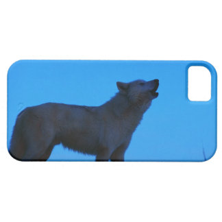 Photo, white wolf howling at night, Color, High iPhone 5 Case
