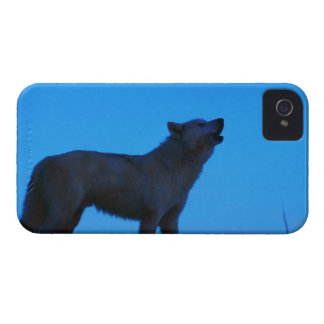 Photo, white wolf howling at night, Color, High iPhone 4 Case